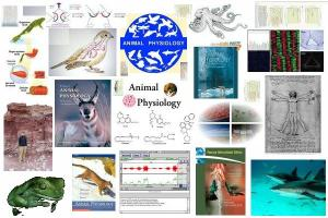 functioning of animals and the chemical factors and processes involved